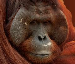 boycotter les produits à base d'huile de palme